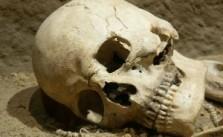 czaszka