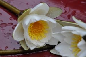 Jak przedłużyć świeżość ciętych kwiatów?