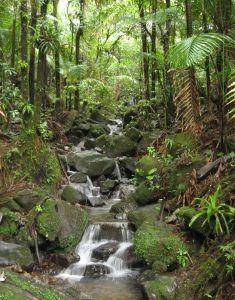 Skutki niszczenia lasów deszczowych