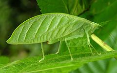 Zjawisko mimikry w przyrodzie