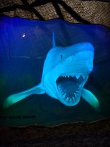 Rekin biały - ludojad