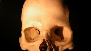 skull_bone_hard_279752_h