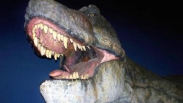 teeth-189249-m