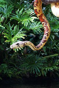 Kult świętych węży