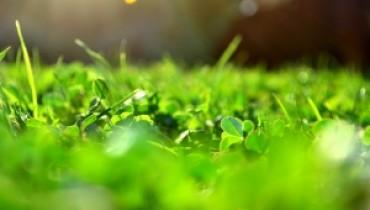 koszenie trawnika1