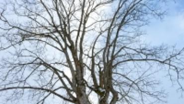 drzewo1
