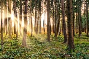 Dlaczego warto dbać o lasy?