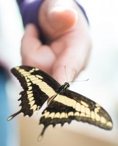 kolekcjonowanie motyli