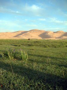 mongolia pustynia gobi