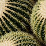 Jak przesadzać kaktusy?
