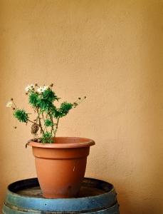 Kwiaty bez opieki