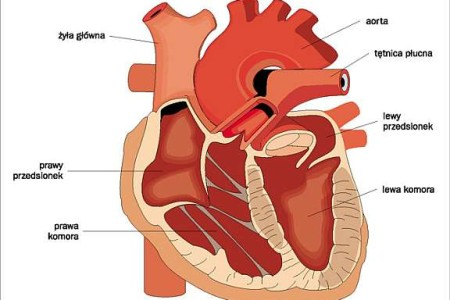 Serce w Rozterce