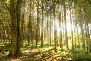 Drzewa, które leczą