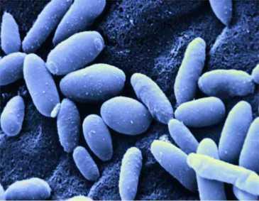 Ryzyko zachorowania na grzybice różnych rodzajów