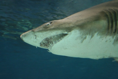 Rekiny wygrywają z nowotworami