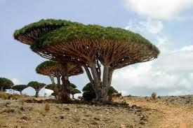 Sokotra - wyspa smoczych drzew