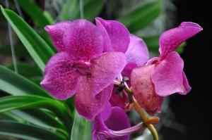 Storczyk to roślina, która wymaga właściwej pielęgnacji, aby pięknie kwitła i efektownie wyglądała.